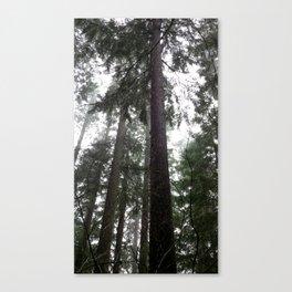 (#36) Tall Wet Evergreens Canvas Print
