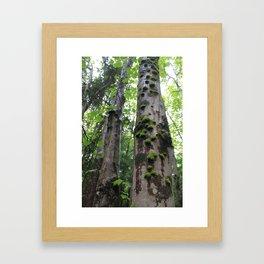 Forest woes, Mt Katahdin Framed Art Print