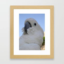 Ruffled Feathers Of A Blue Eyed Cockatoo Framed Art Print