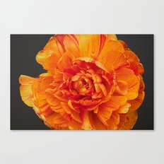 Aflame 2 Canvas Print