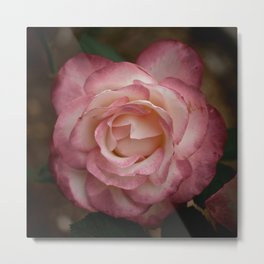 The Rose in the Garden Metal Print