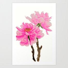 two pink peonies watercolor Art Print
