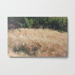 Grasslands Wildlife Preserve, California Metal Print