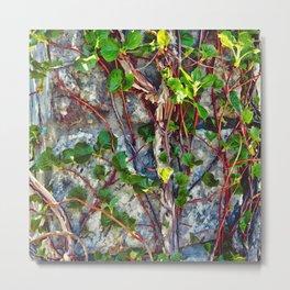 Climbing Vines - Nature's Art Work Metal Print