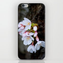 Cherry Blossom 3 iPhone Skin