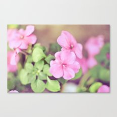 Soft Pinkness Canvas Print