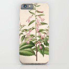 Flower lobelia ghiesbreghtii3 iPhone Case