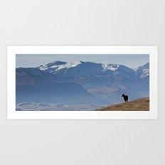 Himalayan Tahr Art Print