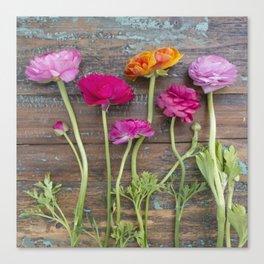 Ranunculus Row Canvas Print