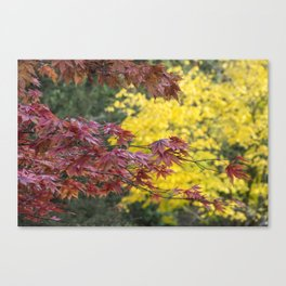 Maple Contrasts Canvas Print