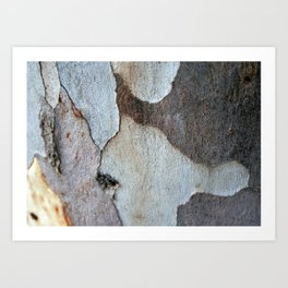 Peeling Bark Of A Eucalyptus Gum Tree Art Print