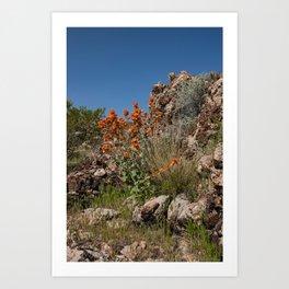 Desert Wildflowers & Cacti in Spring Art Print