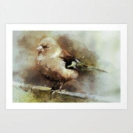 Bird Songbird Chaffinch Fringilla Art Print