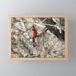 Half-sider Cardinal, half white, half red gynandromorph songbird portrait Framed Mini Art Print