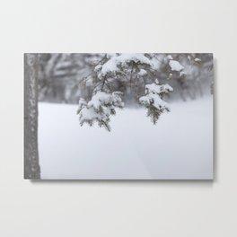 Snowy Spruce Needles 5 Metal Print