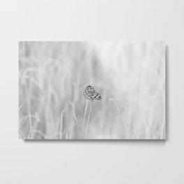 Junonia coenia, Common Buckeye Butterfly Black and White Metal Print