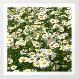 meadow with daisies Art Print