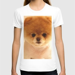 Adorable Pomeranian Puppy T-shirt