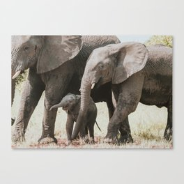 Playful elephant calf Canvas Print