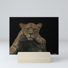 Lioness Looking At You Mini Art Print