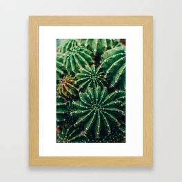 Cactus Study 2 Framed Art Print