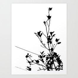Botanical Contrast Art Print