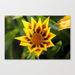 Yellow Flower in the Rain Canvas Print