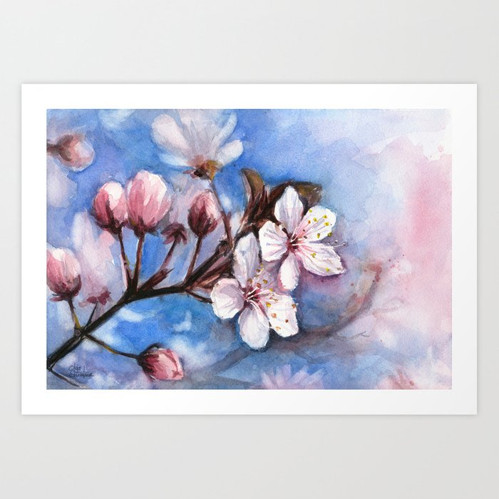 Cherry Blossoms Watercolor Spring Flowers Art Print By Olechka