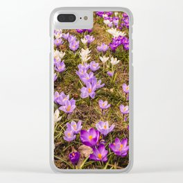 Glade of beautiful flowers crocuses Clear iPhone Case