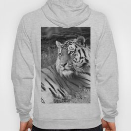 Wildlife Collection: Tiger Hoody