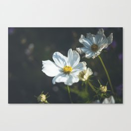 Anemone flowers Canvas Print
