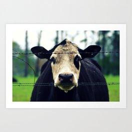 Moo Cow I Art Print