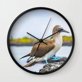 Blue-footed booby Galapagos bird Wall Clock
