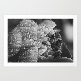 Flower at Dusk Art Print
