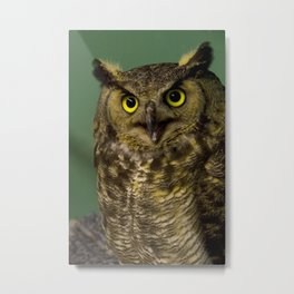 Green Horned Owl Metal Print