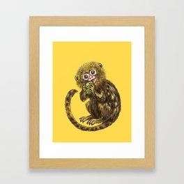 Pygmy Marmoset Framed Art Print