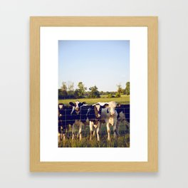 Cows In The Country III Framed Art Print