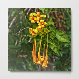 Beautiful orange trumpet flowers Metal Print