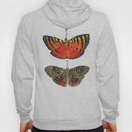 Vibrant Butterflies - red & yellow with tiger stripes, brown with blue eyes Hoody
