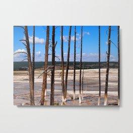 Dead Trees standing in mineral hot springs Metal Print