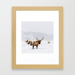 Elk Wintering in Jackson Hole Wyoming Framed Art Print