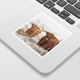 Hairy Scottish highlanders in a natural winter landscape. Sticker