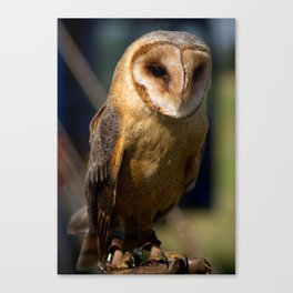 Dusk Dark Breasted Barn Owl Canvas Print