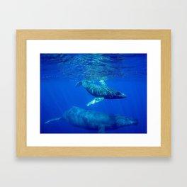 Underwater Humpbacks 10 Framed Art Print