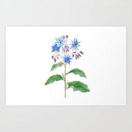 Starflower Art Print