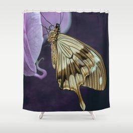 Papilio dardanus butterfly Shower Curtain