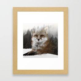 Fox Stare Framed Art Print