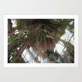 Hanging Roots Art Print