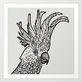 Excited Cockatoo Art Print
