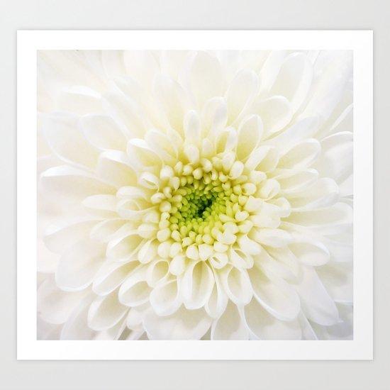 White Chysanthemum Art Print